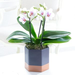 House Plants By Post