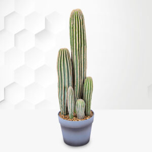 Potted Cactus 23inch